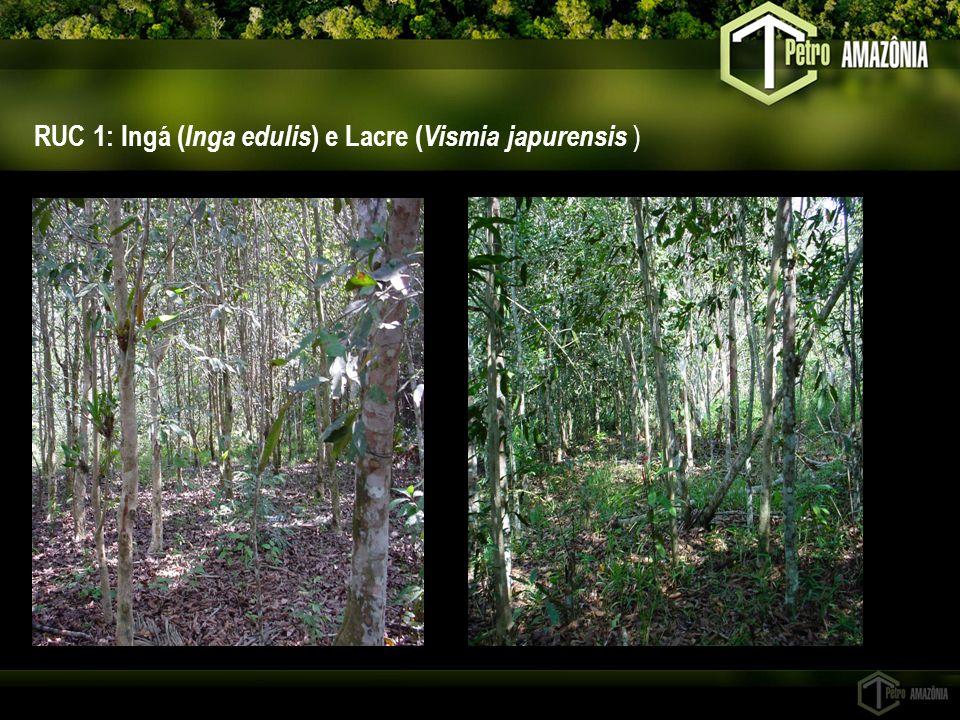 RUC 1: Ingá (Inga edulis) e Lacre (Vismia japurensis )