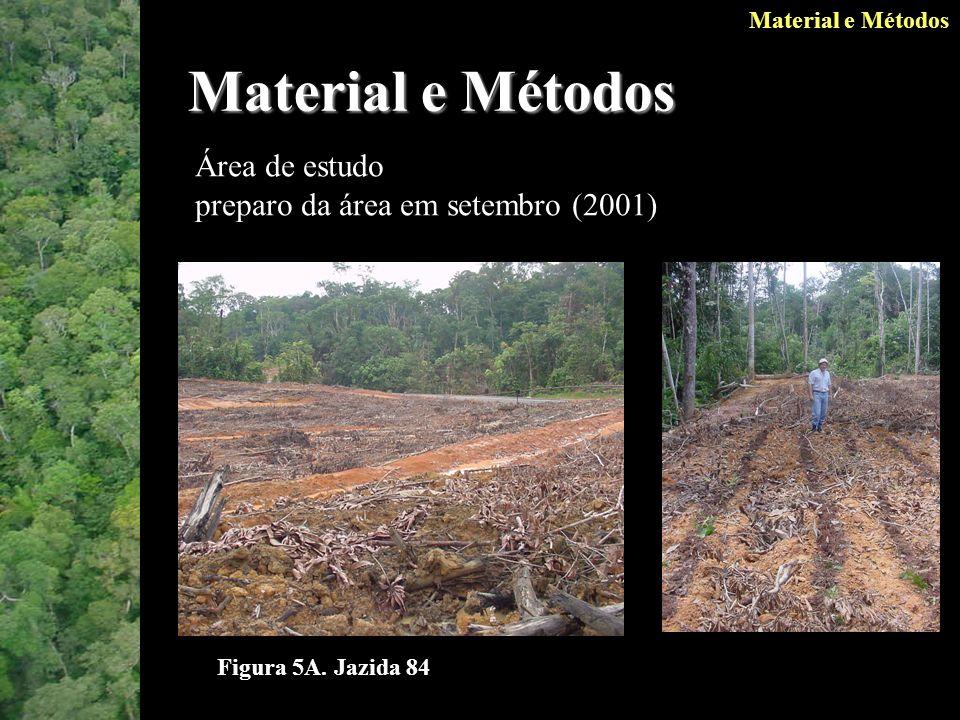 Material e Métodos Área de estudo preparo da área em setembro (2001)