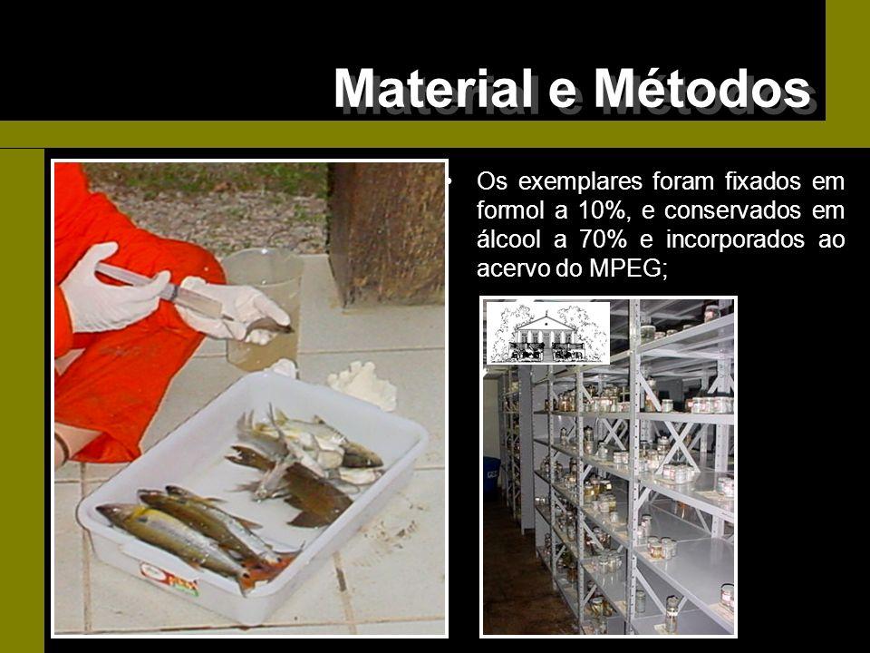 Material e Métodos Os exemplares foram fixados em formol a 10%, e conservados em álcool a 70% e incorporados ao acervo do MPEG;