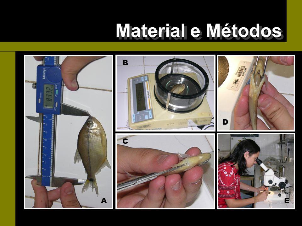 Material e Métodos - Biometria e análise de conteúdo estomacal B D C A