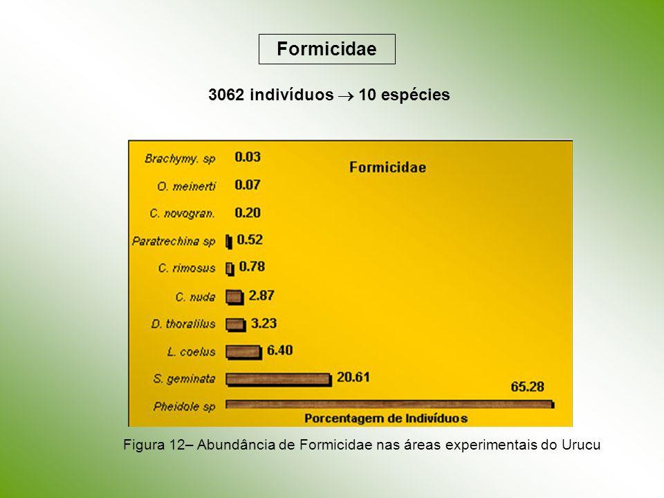Figura 12– Abundância de Formicidae nas áreas experimentais do Urucu