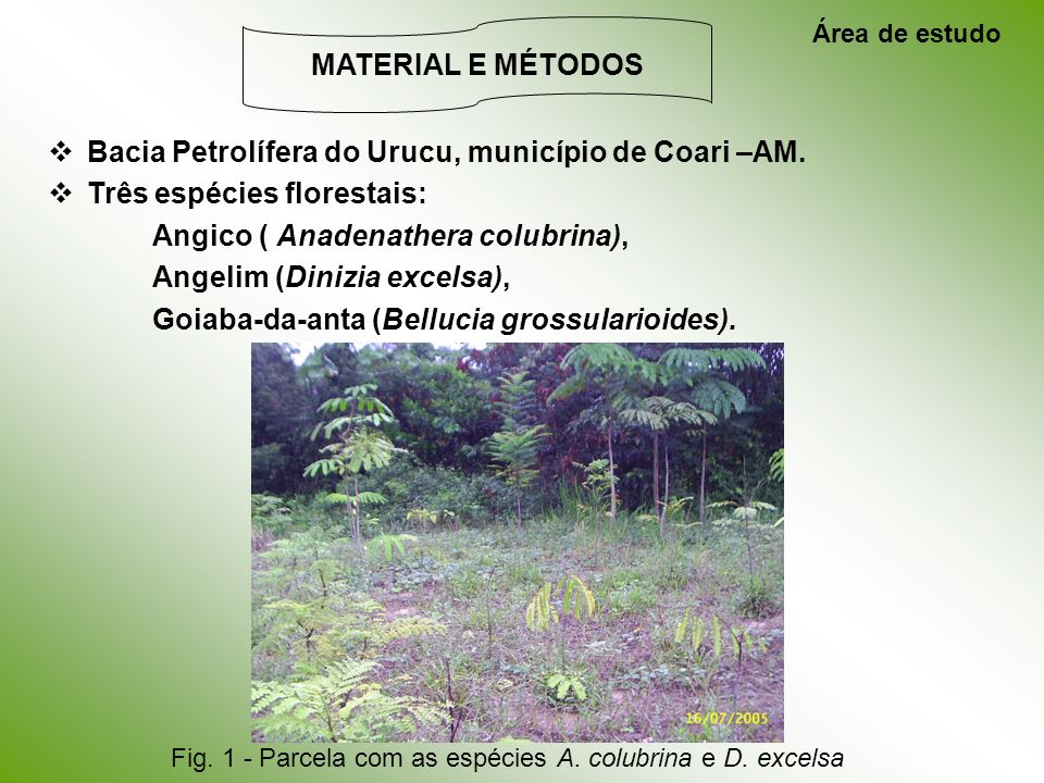 Bacia Petrolífera do Urucu, município de Coari –AM.