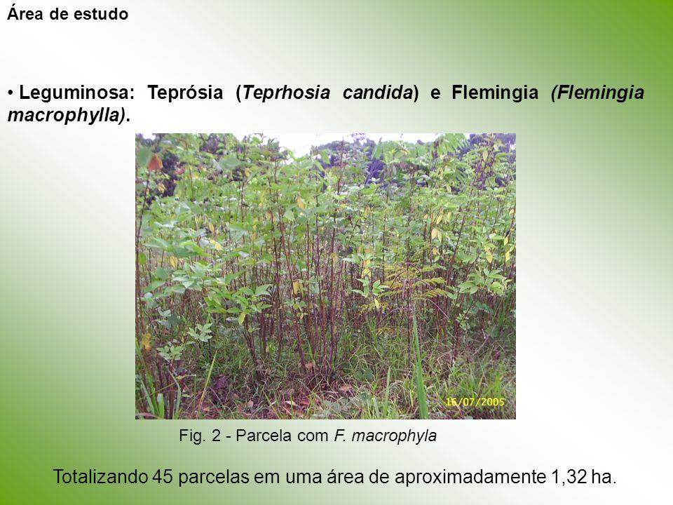 Área de estudo Leguminosa: Teprósia (Teprhosia candida) e Flemingia (Flemingia macrophylla). Fig. 2 - Parcela com F. macrophyla.
