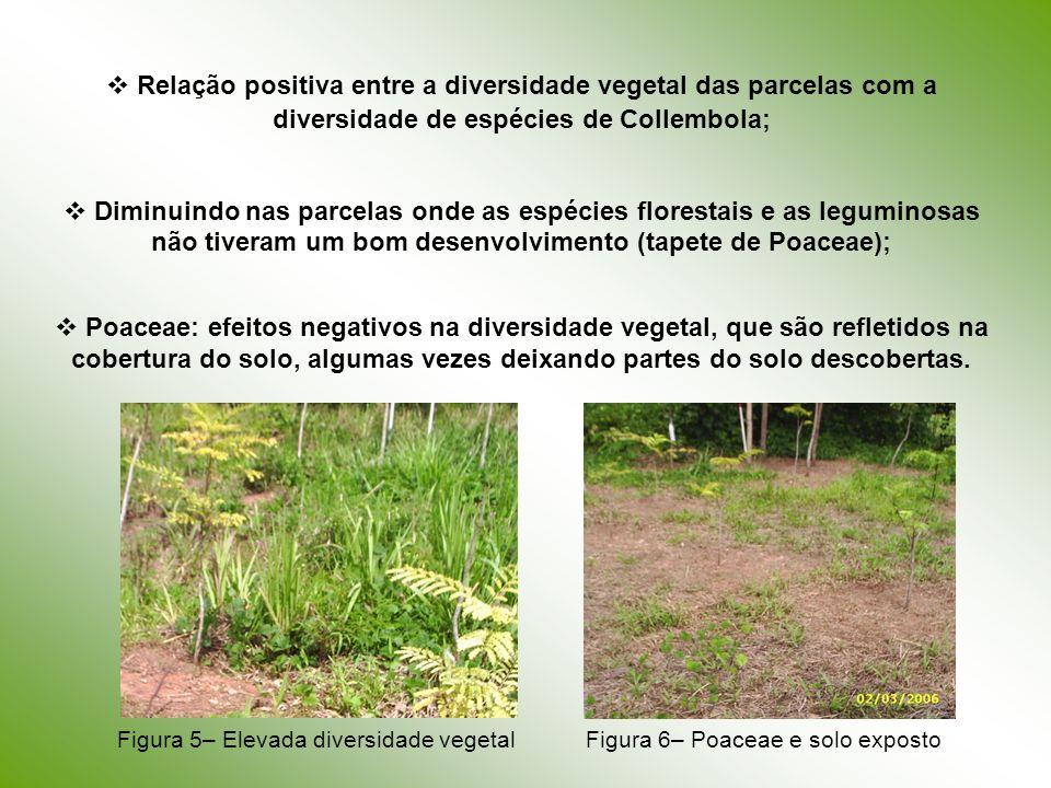 Relação positiva entre a diversidade vegetal das parcelas com a diversidade de espécies de Collembola;