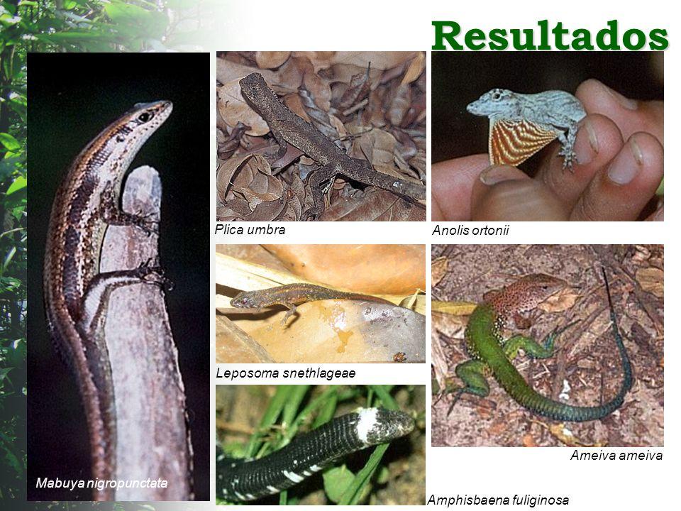 Resultados Plica umbra Anolis ortonii Leposoma snethlageae
