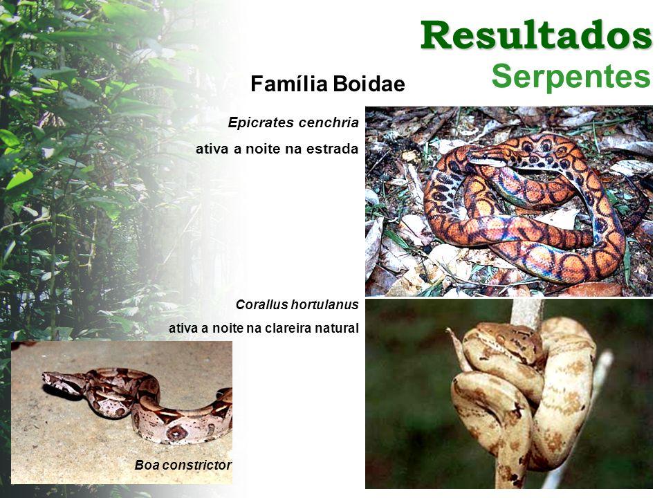 Resultados Serpentes Família Boidae Epicrates cenchria