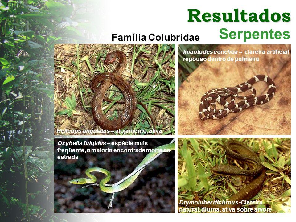 Resultados Serpentes Família Colubridae