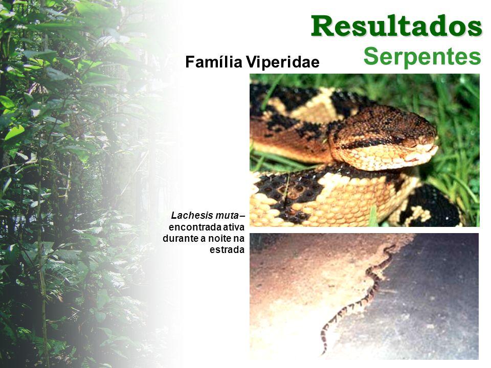 Resultados Serpentes Família Viperidae