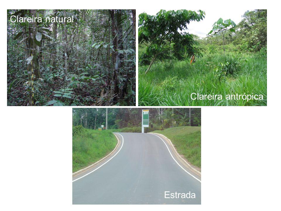 Clareira natural Clareira antrópica Estrada