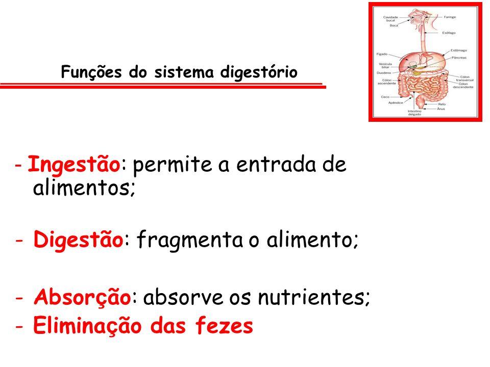 Funções do sistema digestório