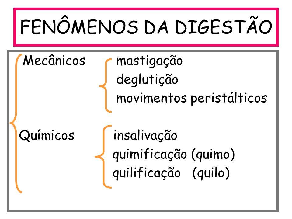 FENÔMENOS DA DIGESTÃO Mecânicos mastigação deglutição