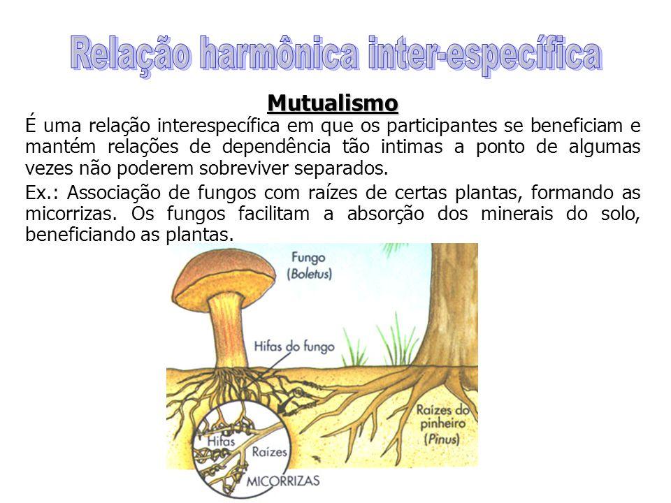 Relação harmônica inter-específica