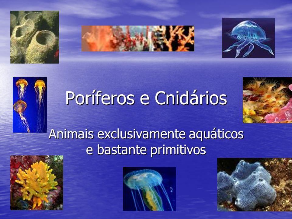 Animais exclusivamente aquáticos e bastante primitivos