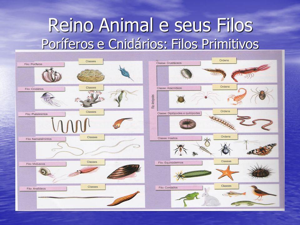 Reino Animal e seus Filos Poríferos e Cnidários: Filos Primitivos