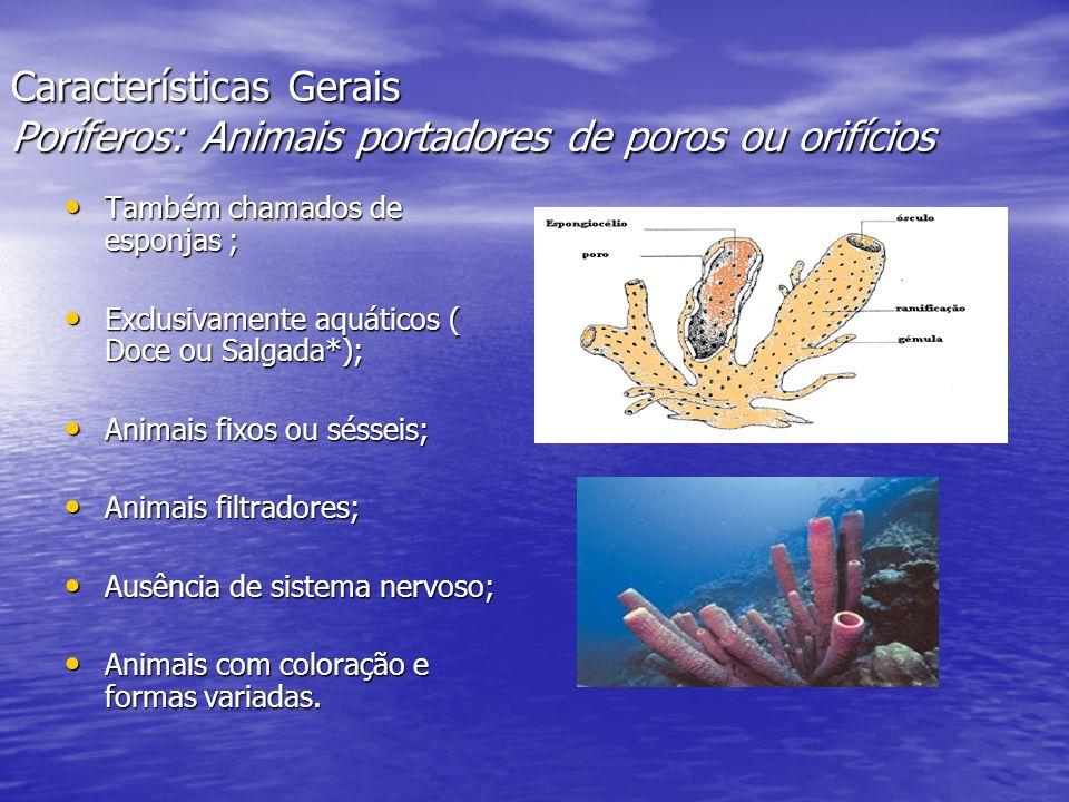 Características Gerais Poríferos: Animais portadores de poros ou orifícios
