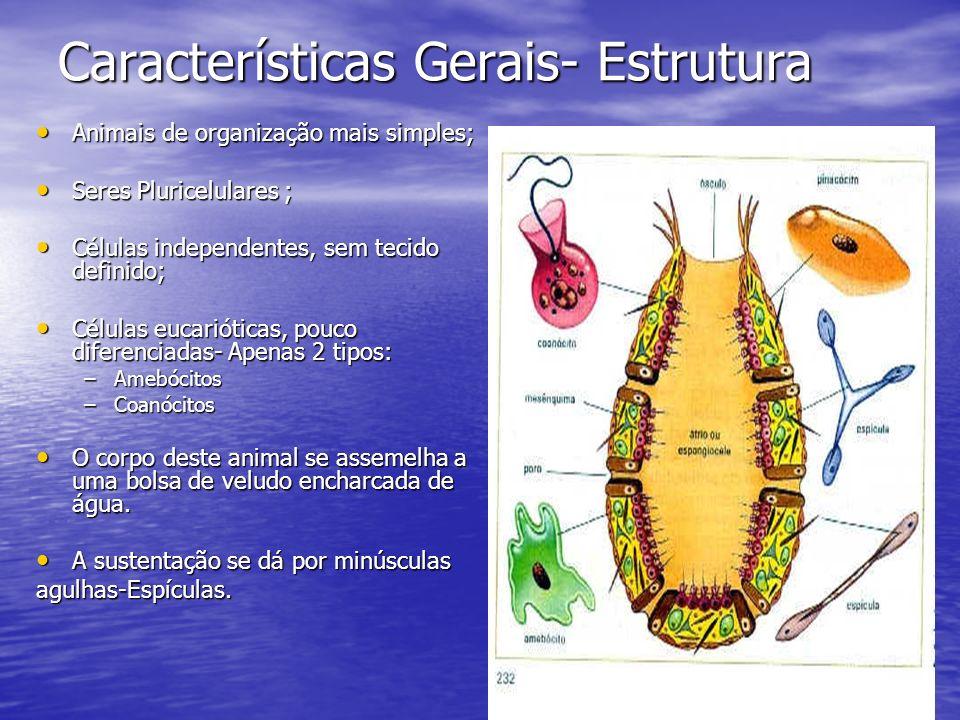 Características Gerais- Estrutura