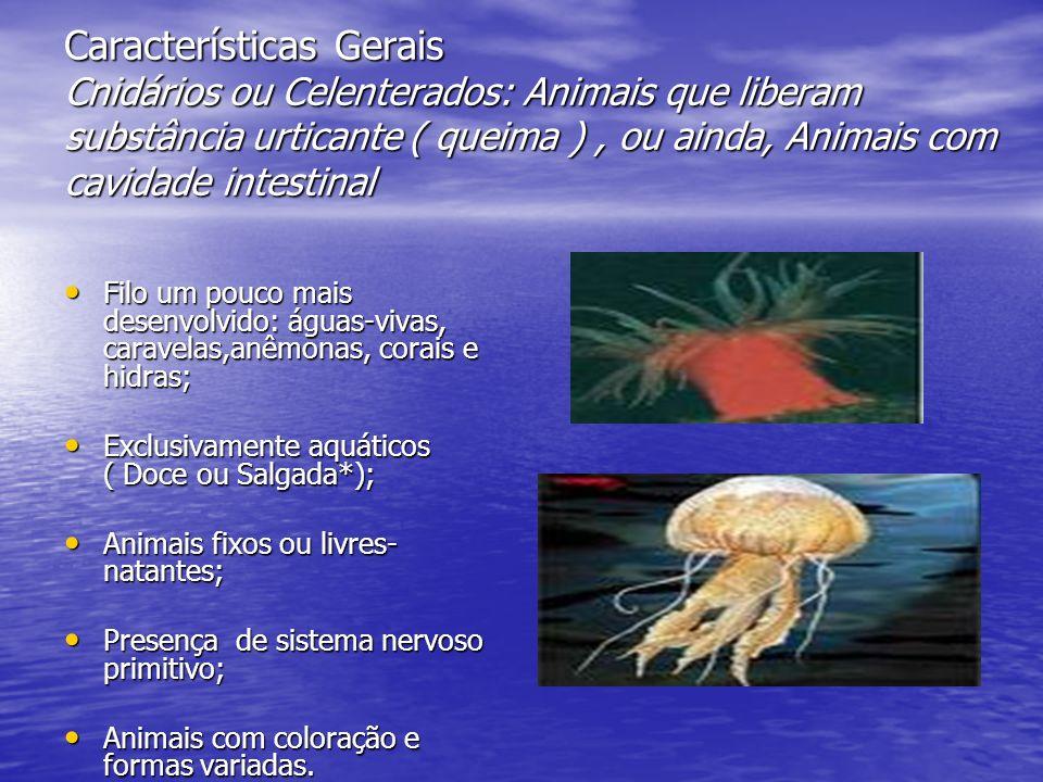 Características Gerais Cnidários ou Celenterados: Animais que liberam substância urticante ( queima ) , ou ainda, Animais com cavidade intestinal
