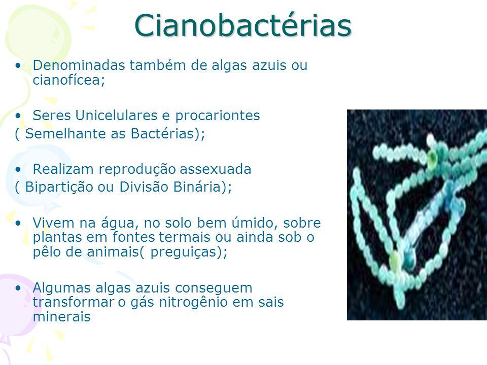 Cianobactérias Denominadas também de algas azuis ou cianofícea;