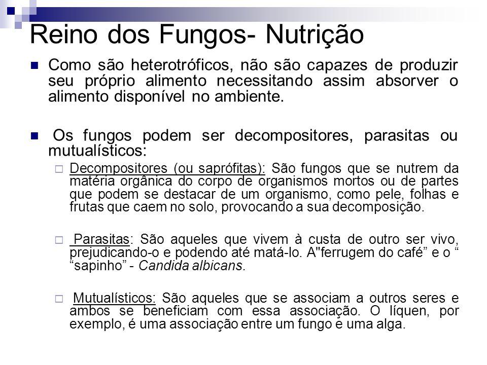 Reino dos Fungos- Nutrição