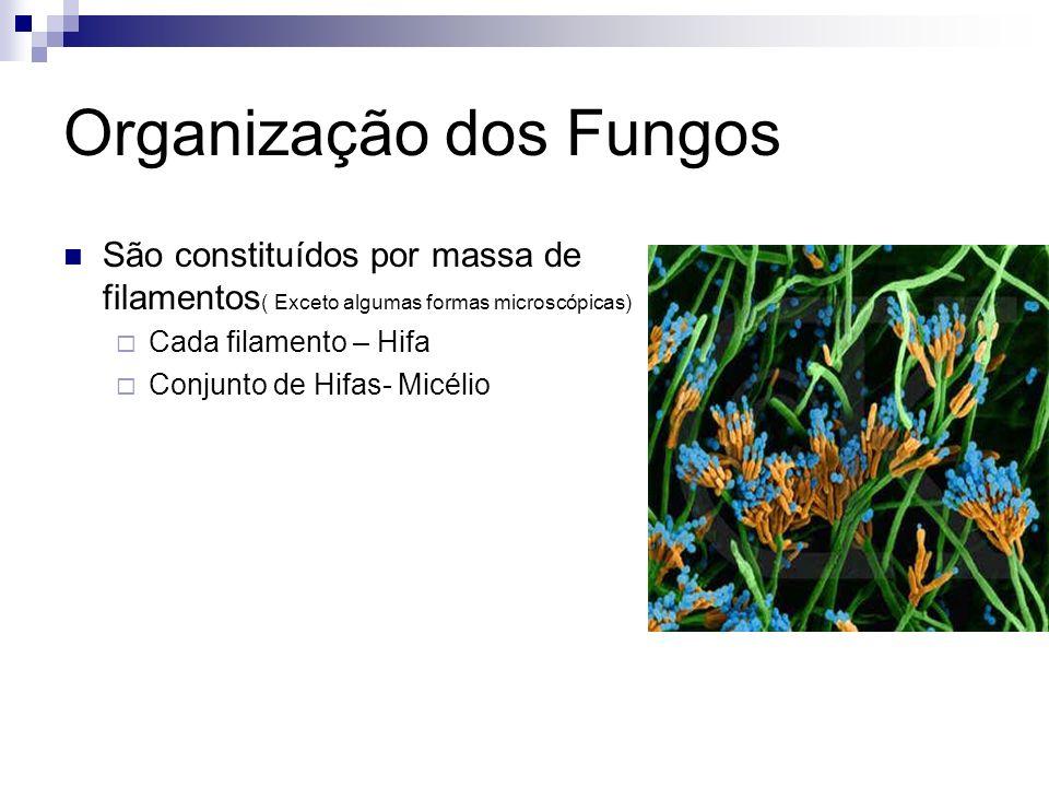 Organização dos Fungos
