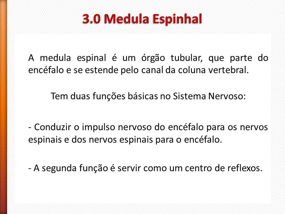 3.0 Medula Espinhal
