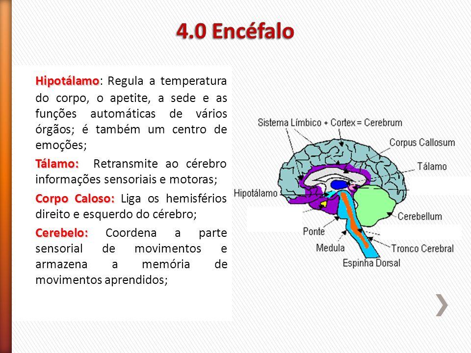 4.0 EncéfaloHipotálamo: Regula a temperatura do corpo, o apetite, a sede e as funções automáticas de vários órgãos; é também um centro de emoções;