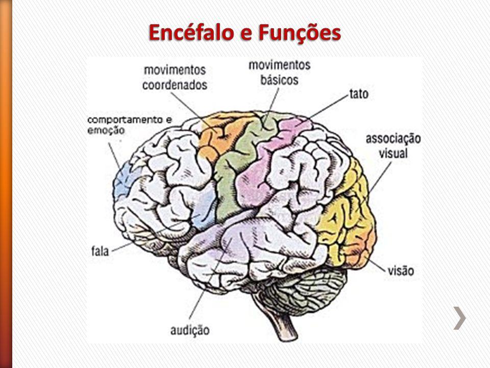 Encéfalo e Funções