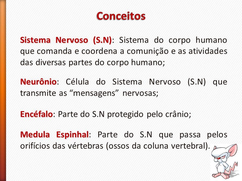Conceitos Sistema Nervoso (S.N): Sistema do corpo humano que comanda e coordena a comunição e as atividades das diversas partes do corpo humano;