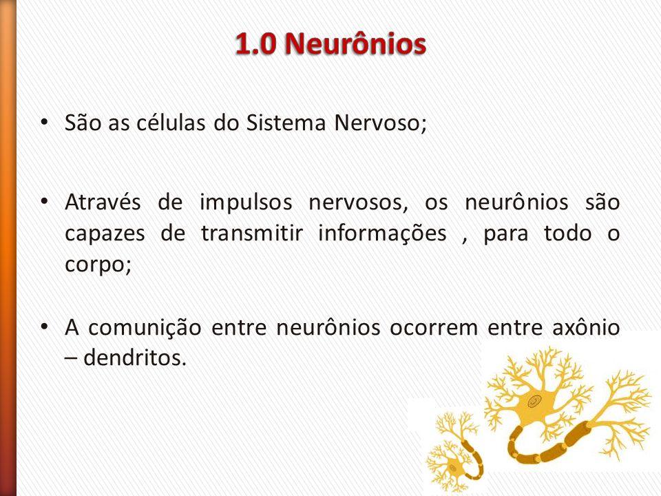 1.0 Neurônios São as células do Sistema Nervoso;