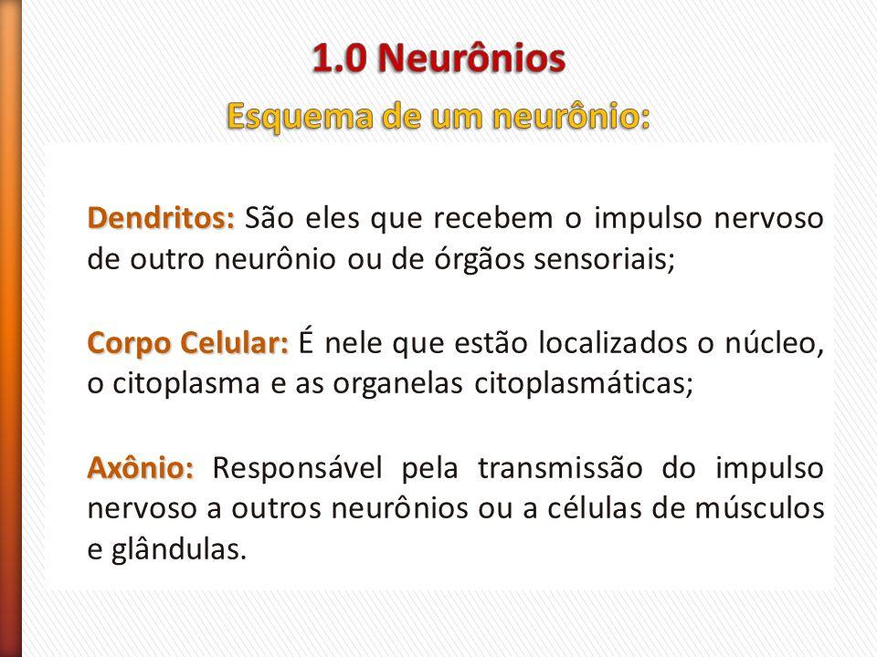 Esquema de um neurônio: