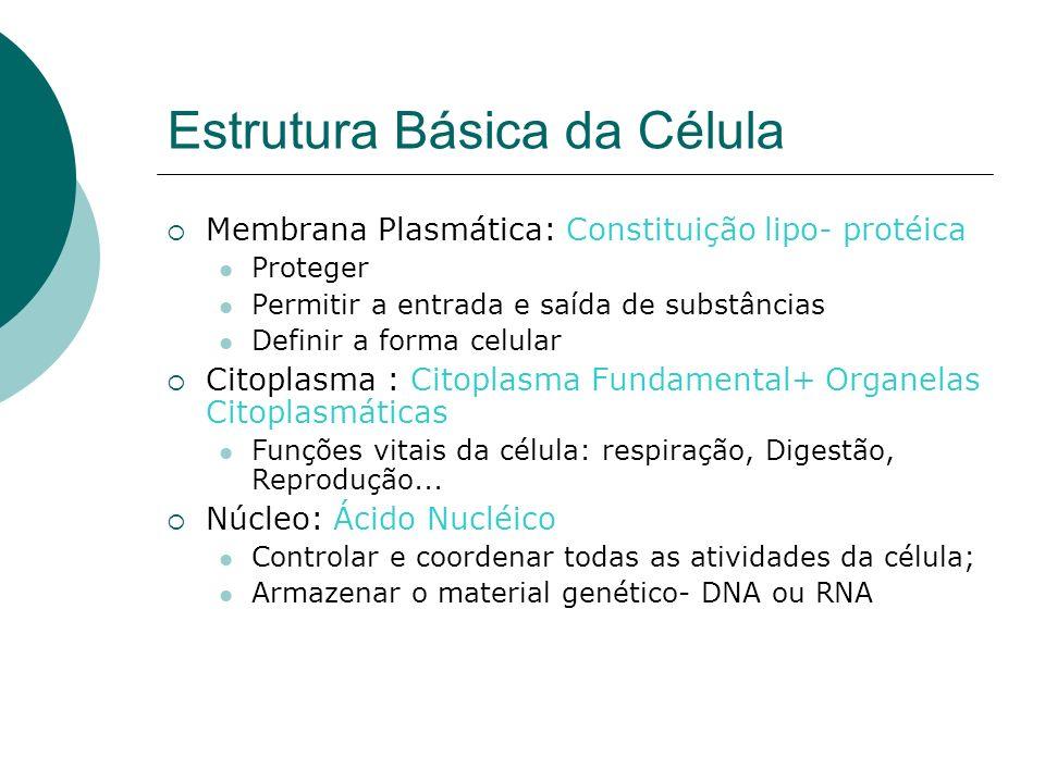 Estrutura Básica da Célula