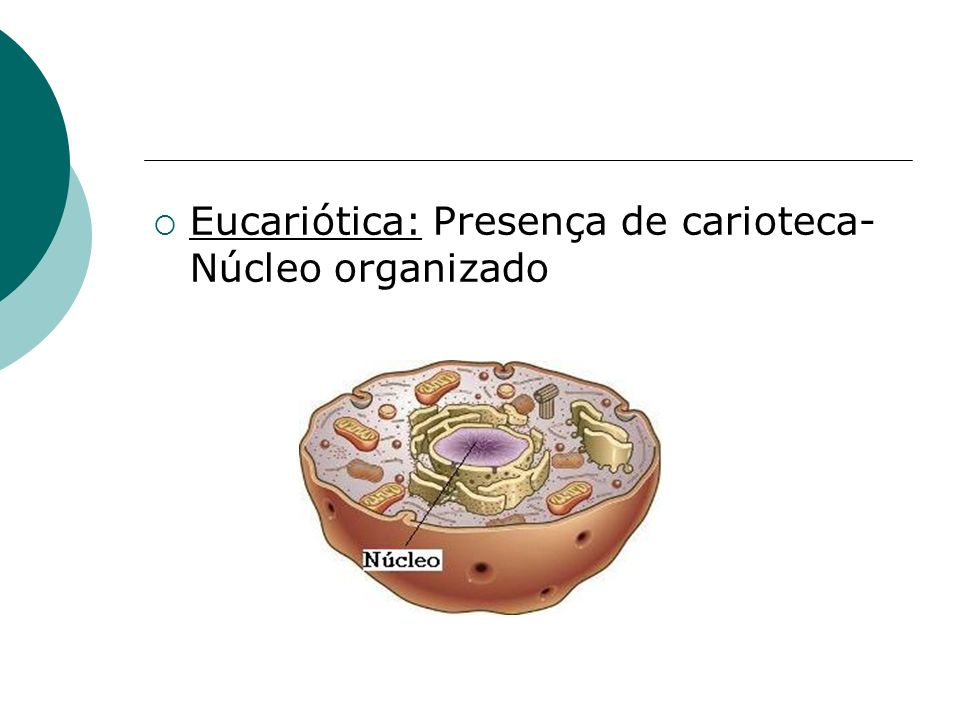 Eucariótica: Presença de carioteca- Núcleo organizado