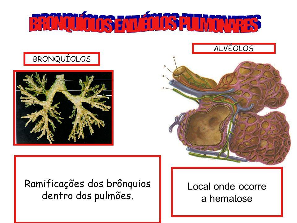 BRONQUÍOLOS E ALVÉOLOS PULMONARES