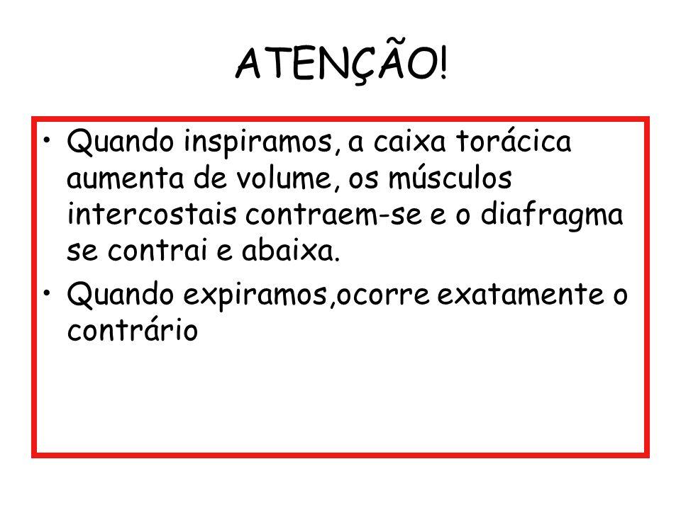 ATENÇÃO! Quando inspiramos, a caixa torácica aumenta de volume, os músculos intercostais contraem-se e o diafragma se contrai e abaixa.