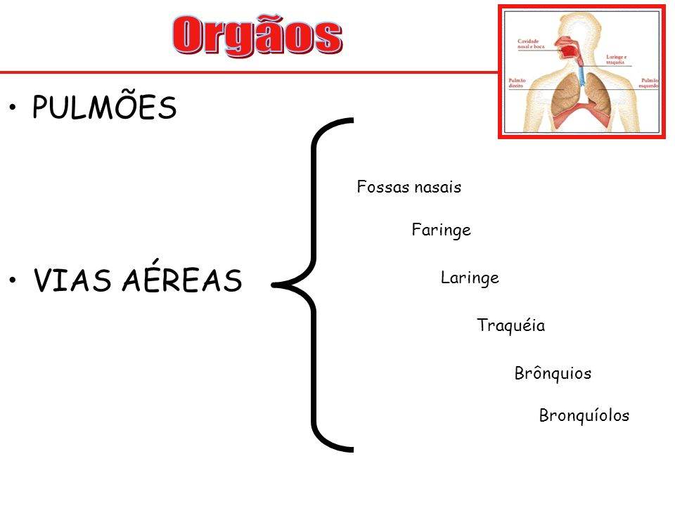 Orgãos PULMÕES VIAS AÉREAS Fossas nasais Faringe Laringe Traquéia