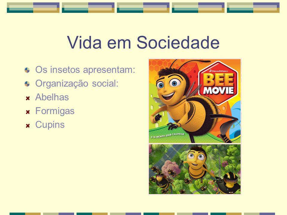 Vida em Sociedade Os insetos apresentam: Organização social: Abelhas