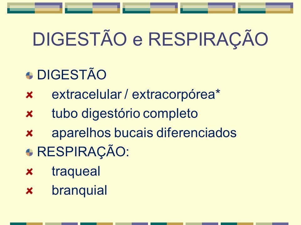 DIGESTÃO e RESPIRAÇÃO DIGESTÃO extracelular / extracorpórea*