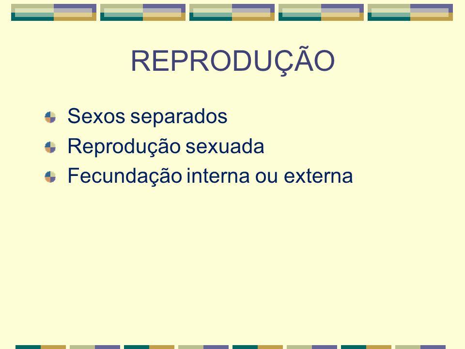 REPRODUÇÃO Sexos separados Reprodução sexuada