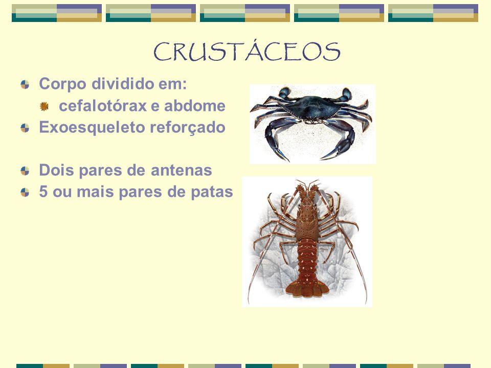 CRUSTÁCEOS Corpo dividido em: cefalotórax e abdome