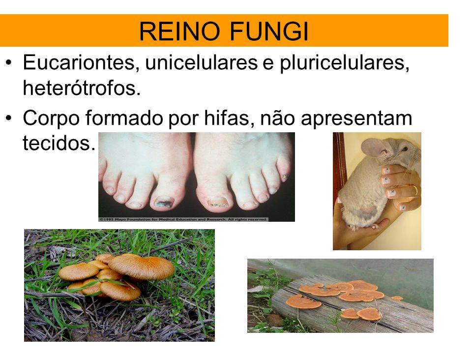 REINO FUNGI Eucariontes, unicelulares e pluricelulares, heterótrofos.