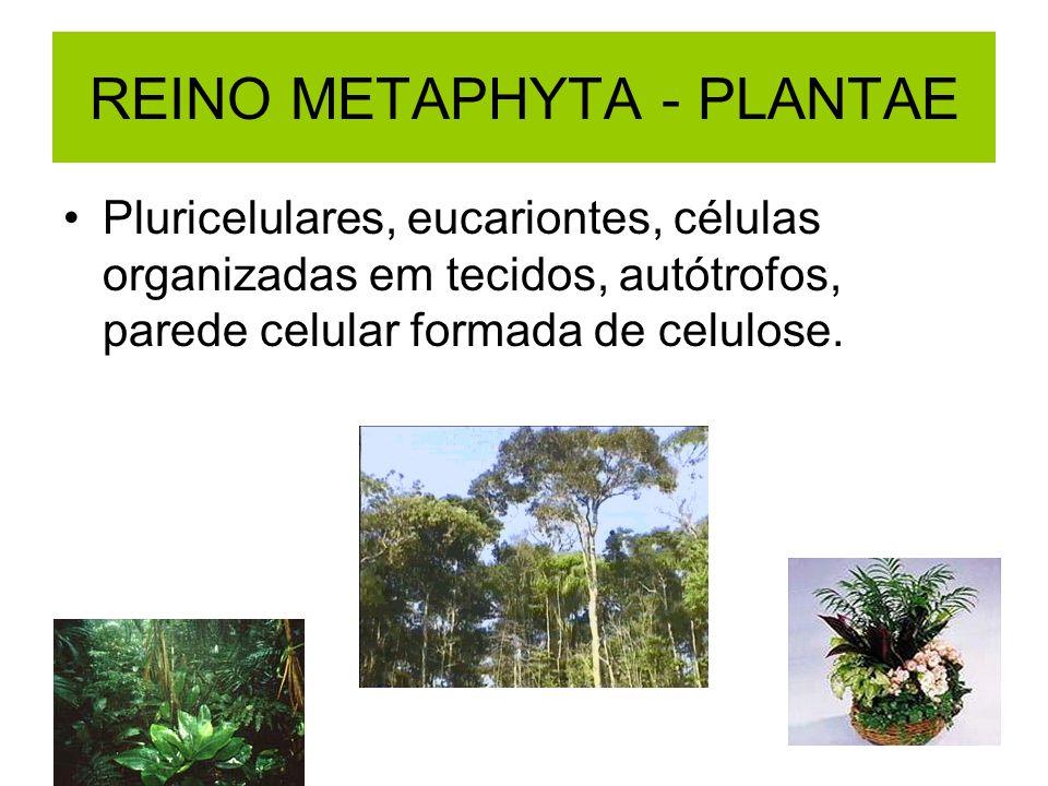 REINO METAPHYTA - PLANTAE