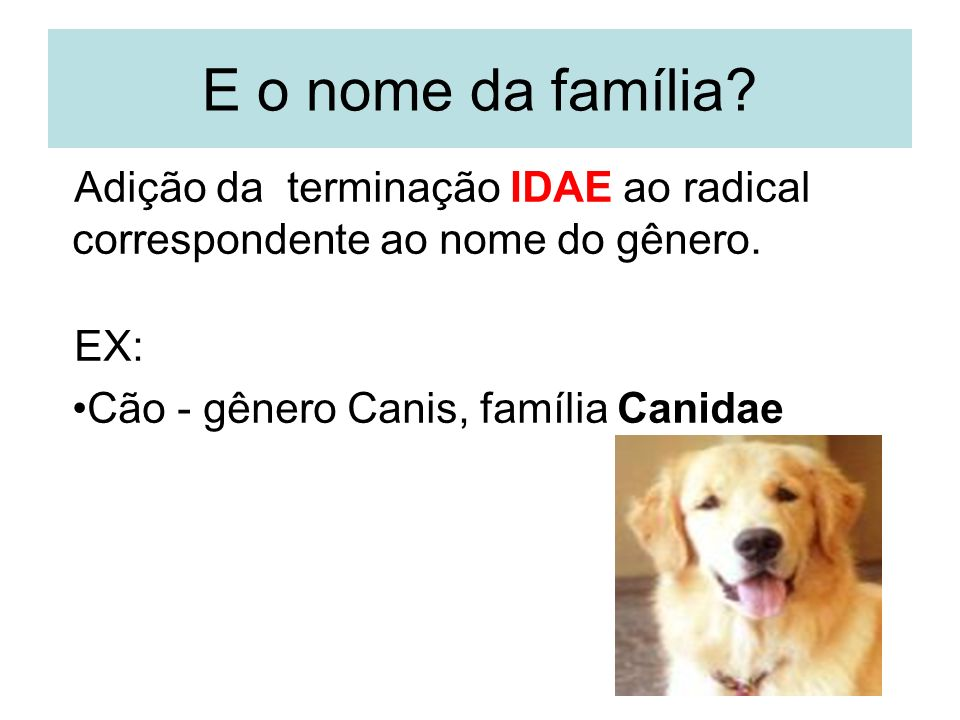 E o nome da família. Adição da terminação IDAE ao radical correspondente ao nome do gênero.