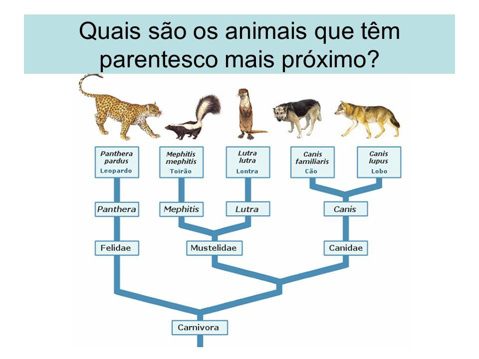 Quais são os animais que têm parentesco mais próximo