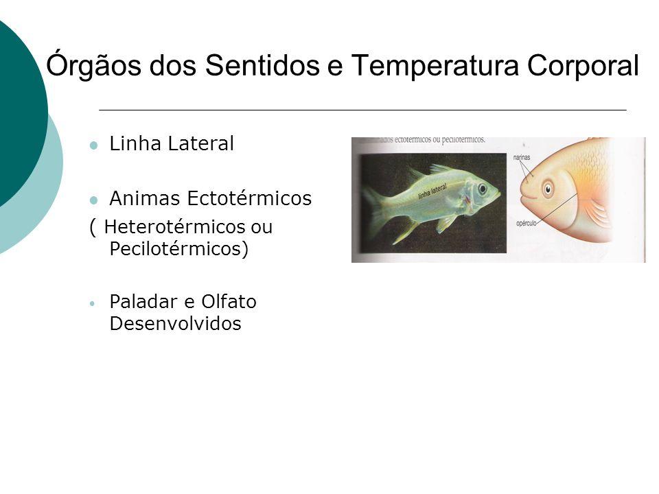 Órgãos dos Sentidos e Temperatura Corporal