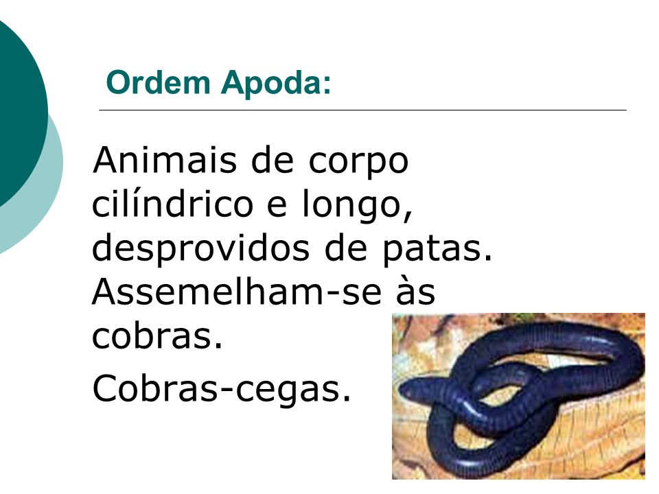 Ordem Apoda: Animais de corpo cilíndrico e longo, desprovidos de patas.