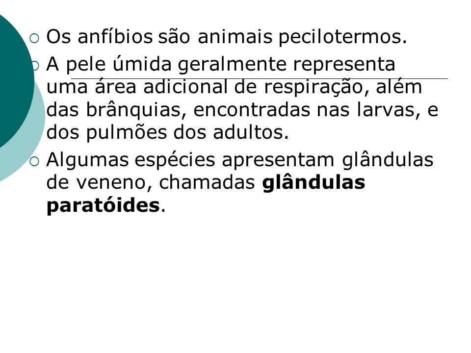 Os anfíbios são animais pecilotermos.