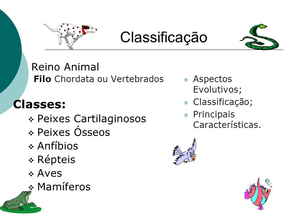 Classificação Classes: Reino Animal Peixes Cartilaginosos