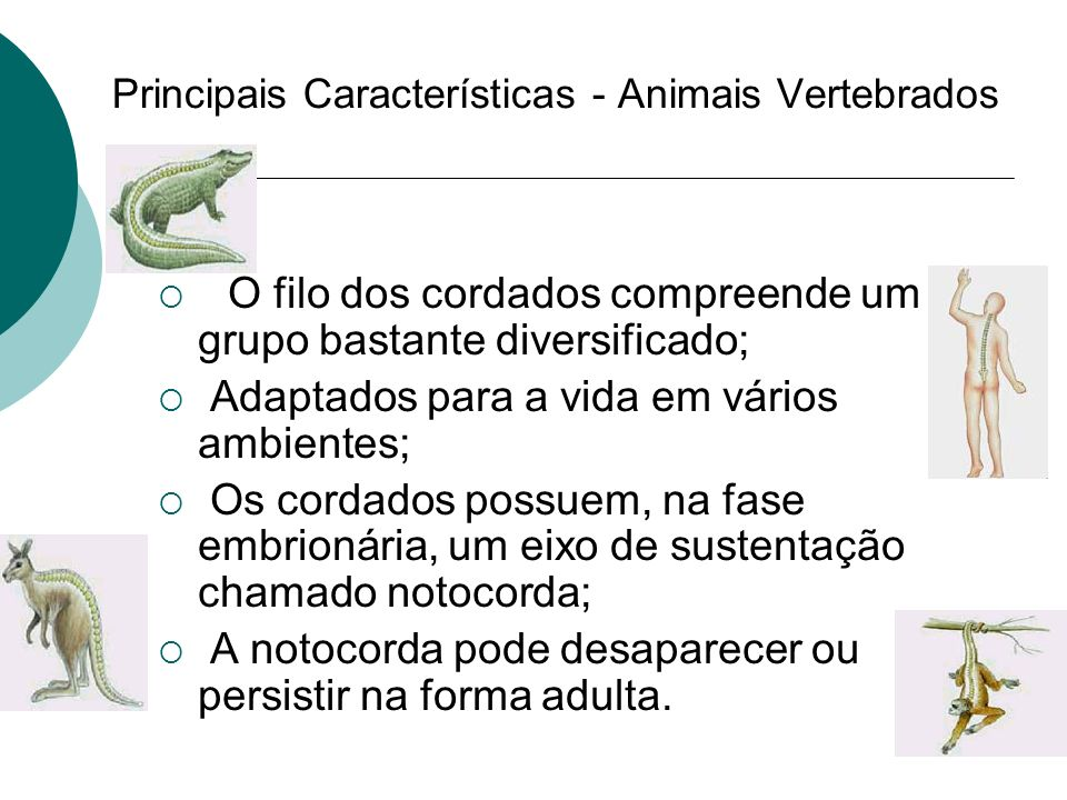 Principais Características - Animais Vertebrados