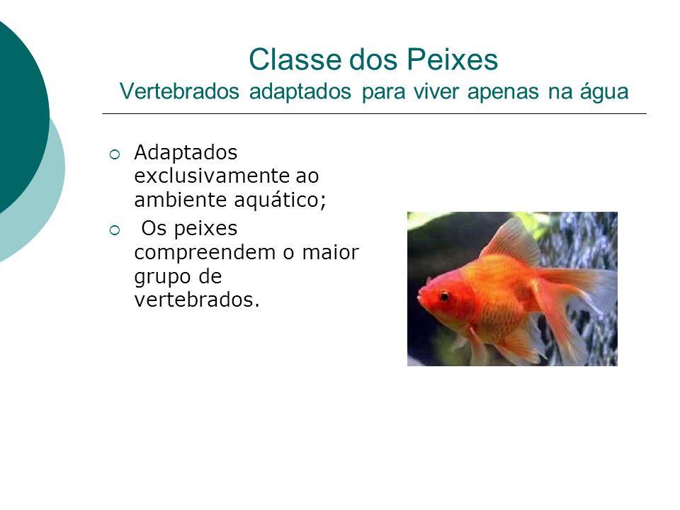 Classe dos Peixes Vertebrados adaptados para viver apenas na água