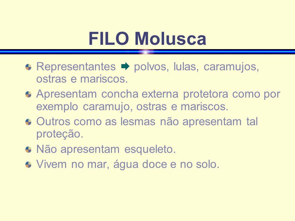 FILO Molusca Representantes  polvos, lulas, caramujos, ostras e mariscos.